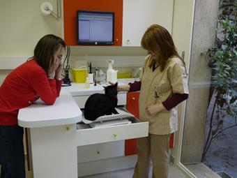 Consultation chat, clinique vétérinaire de Vincennes