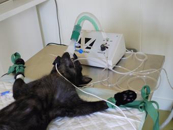 Chirurgie, clinique vétérinaire pour chats de Vincennes