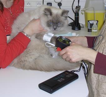 Consultation, clinique vétérinaire pour chats, Vincennes