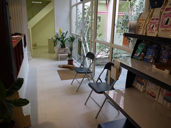 Accueil, nutrition chats, clinique vétérinaire de Vincennes
