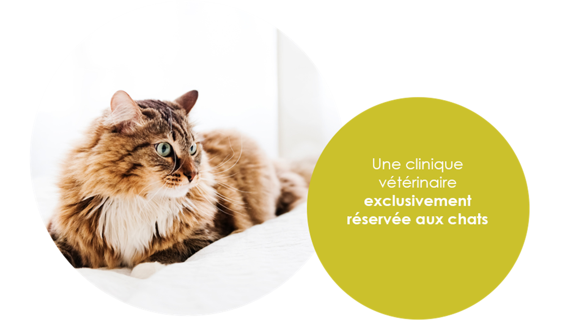 vincennes chat Search for other veterinary specialty services in vincennes on  brocksmith veterinary associates in  he takes his time and will chat with you about all .